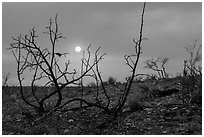 Sun through wildfire smoke and burned shrubs. Carlsbad Caverns National Park ( black and white)