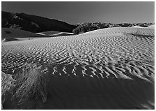 Ripples on Mesquite Dunes, early morning. Death Valley National Park, California, USA. (black and white)