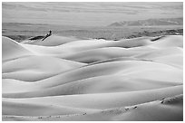 Dune ridges with photographer in the distance, Mesquite Sand Dunes, morning. Death Valley National Park ( black and white)