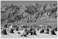 Devil's cornfield and Armagosa Mountains. Death Valley National Park ( black and white)