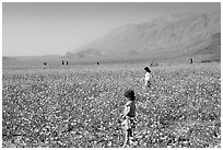 Children in a carpet of Desert Gold near Ashford Mill. Death Valley National Park, California, USA. (black and white)
