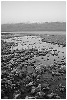 Recently emerged salt pools, Badwater, dawn. Death Valley National Park ( black and white)