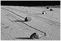 Gliding rocks and trails the Racetrack playa. Death Valley National Park, California, USA. (black and white)