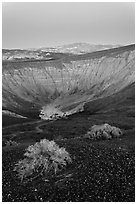 Sagebrush and Ubehebe Crater at dusk. Death Valley National Park, California, USA. (black and white)