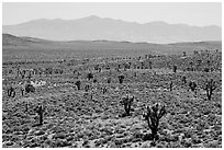 Joshua trees on Lee Flat and Panamint Range. Death Valley National Park ( black and white)