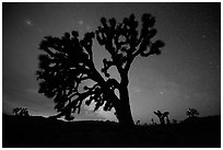 Joshua Trees and stars at night, Lee Flat. Death Valley National Park ( black and white)