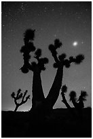 Joshua Trees, stars and planet, Lee Flat. Death Valley National Park ( black and white)