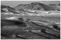 Shrubs and sand, Ibex Dunes. Death Valley National Park ( black and white)