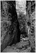 Narrow passage between cliffs, Devil's Hall. Guadalupe Mountains National Park, Texas, USA. (black and white)