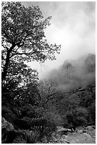 Autumn colors, wash, and clearing clouds, Pine Spring Canyon. Guadalupe Mountains National Park ( black and white)