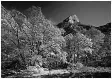 Fall foliage and cliffs, McKittrick Canyon. Guadalupe Mountains National Park, Texas, USA. (black and white)
