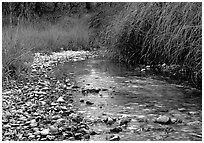 The only year-long stream in the park, McKittrick Canyon. Guadalupe Mountains National Park, Texas, USA. (black and white)