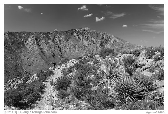 Hiker on trail above Pine Spring Canyon. Guadalupe Mountains National Park, Texas, USA.
