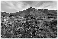 Chihuahan desert cactus and mountains. Guadalupe Mountains National Park ( black and white)