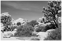 Campers, Hidden Valley Campground. Joshua Tree National Park, California, USA. (black and white)