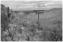 Tucson Mountains from Hugh Norris Trail. Saguaro National Park, Arizona, USA. (black and white)