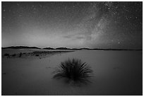 Yucca and Milky Way. White Sands National Park ( black and white)