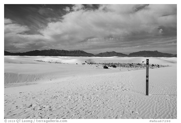 Backcountry trail. White Sands National Park (black and white)