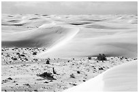 Depression with vegetation and dunes. White Sands National Park ( black and white)