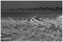Grasses and dune footprints. White Sands National Park ( black and white)