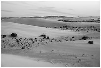Dunes and interdunal depressions at sunset. White Sands National Park ( black and white)