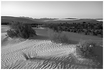 Animal footprints and shurbs in sand dunes. White Sands National Park ( black and white)