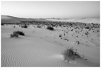 Shrubs and dunes at twilight. White Sands National Park ( black and white)