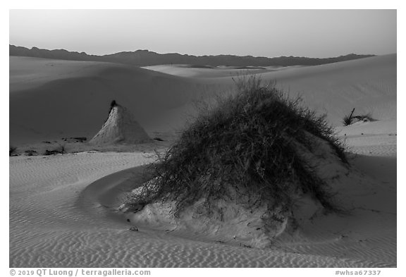 Sumac pedestals at sunset. White Sands National Park (black and white)