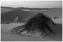 Sumac pedestals at sunset. White Sands National Park ( black and white)