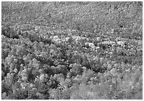 Valley filled  with trees in autumn foliage. Acadia National Park ( black and white)