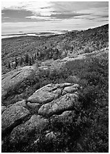 Poison Sumac in bright fall color, rock slabs, forest on hillside, and coast. Acadia National Park ( black and white)