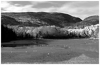 Otter Cove at low tide looking at Cadillac Mountain and Dorr Mountain. Acadia National Park, Maine, USA. (black and white)