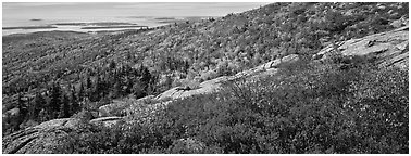 Autumn landscape with brightly colors shrubs and trees. Acadia National Park (Panoramic black and white)