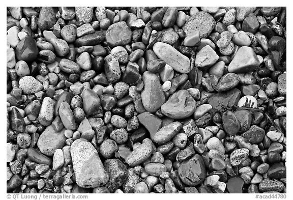 Wet pebbles, Hunters beach. Acadia National Park (black and white)