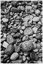 Close-up of multicolored pebbles. Acadia National Park ( black and white)