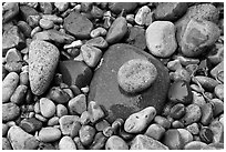 Colorful pebbles shining in the rain. Acadia National Park ( black and white)