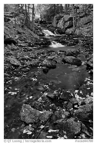 Stream in autumn. Acadia National Park (black and white)