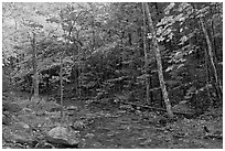 Forest stream in the fall. Acadia National Park ( black and white)