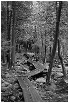 Boardwalk in forest. Acadia National Park ( black and white)