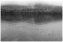 Reeds, hillside in autumn foliage, and fog, Jordan Pond. Acadia National Park ( black and white)