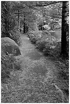 Trail in the fall on the shore of Jordan Pond. Acadia National Park ( black and white)