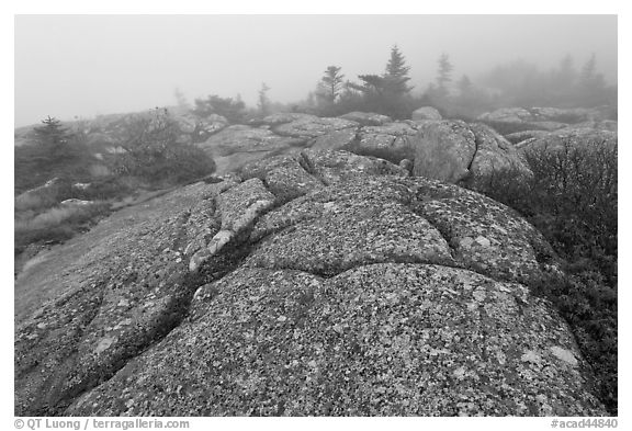 Lichen-covered slabs in the heavy mist, Mount Cadillac. Acadia National Park (black and white)