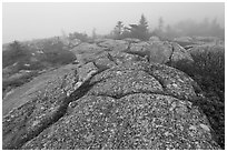 Lichen-covered slabs in the heavy mist, Mount Cadillac. Acadia National Park ( black and white)