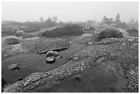 Water-filled holes in granite slabs and fog, Cadillac Mountain. Acadia National Park, Maine, USA. (black and white)