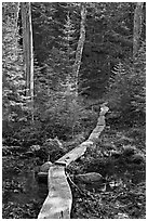 Boardwalk in forest, Isle Au Haut. Acadia National Park ( black and white)