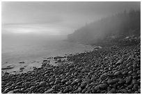 Boulder beach and cliffs in fog, dawn. Acadia National Park ( black and white)
