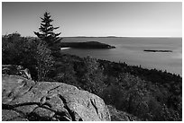 Outcrop, Sand Beach and trees from Gorham Mountain. Acadia National Park ( black and white)