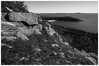 Shrubs and flowers on ledge overlooking coast. Acadia National Park ( black and white)