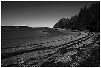 Beach around Bar Harbor Island at low tide. Acadia National Park ( black and white)