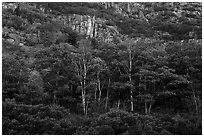 Tress and Champlain Mountains cliffs. Acadia National Park ( black and white)